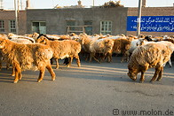 15 Sheep herd on street